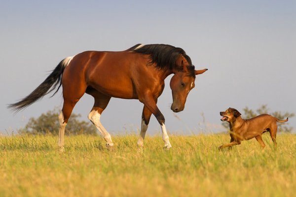 dog and horse acupuncture