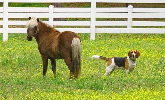 dog and horse chiro